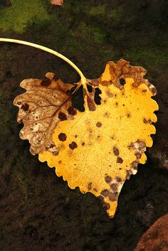 fall leaf...you light up my life