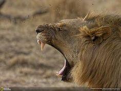 Les 35 plus belles photos du concours National Geographic 2014 vont vous en mettre plein la vue