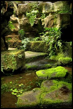 You can use your backyard pond for spending quality family time and have evening tea. The good thing about the backyard pond is that gurgling waterfalls are very much attractive and appealing. So if you haven`t decided on having a pond you must do it now. Moss Garden, Garden Paths, Garden Landscaping, Gravel Garden, Pea Gravel, Succulent Planters, Succulents Garden, Hanging Planters, Herb Garden