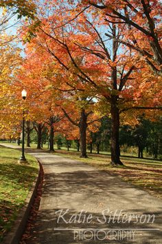 Fall Foliage Forest Hill Park in Richmond Va Photo by ImageAppeal, $25.00