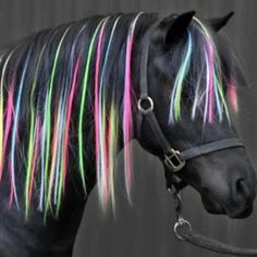 Neon colored horse mane! So cool!!