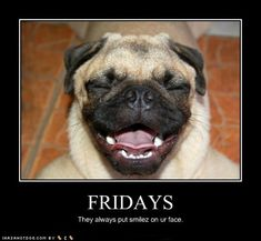 FRIDAYS - Funny pictures and memes of dogs doing and implying things. If you thought you couldn't possible love dogs anymore, this might prove you wrong. Funny Pug Pictures, Dog Pictures, Friday Pictures, Funny Photos, Pug Photos, Animal Memes, Funny Animals, Cute Animals, Crazy Animals