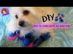 How to make boots for dogs, DIY, NO SEWING, Coton de tulear I Lorentix - YouTube