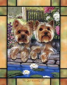 All About Yorkshire Terrier Puppy Training Baby Puppies, Cute Puppies, Dogs And Puppies, Doggies, Yorkshire Terrier Haircut, Yorkshire Terrier Puppies, Terrier Dogs, Baby Animals, Cute Animals