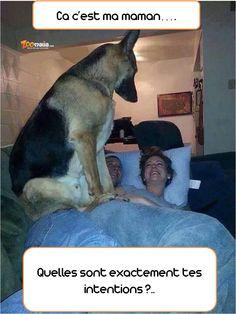 Quand le #chien surveille ...#bergerallemand #germansheperd #chien #dog #humour #picoftheday