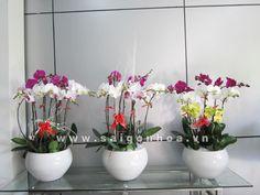 Xu hướng tặng quà bằng cây hoa cảnh lên ngôi   Sài Gòn Hoa
