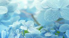 Relaxing Piano Music: Relaxing Music, Romantic Music, Beautiful Music, S...