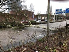 Omgewaaide boom blokkeert verkeer in Stadshart