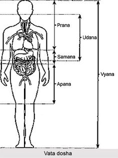 The five types of Vata dosha are: prana, udana, samana, apana and vyana. Prana is also known as air of respiration. It also means 'life' which is the first ...