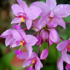 #orchid #orchids #beautiful #flower