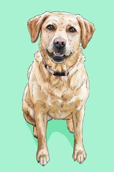gift for dog lover, gift for dog owner, labrador, yellow lab art Custom Dog Portraits, Pet Portraits, Cat And Dog Drawing, Cat Themed Gifts, Cat Photography, Cartoon Dog, Animal Pillows, Dog Gifts, Dog Mom