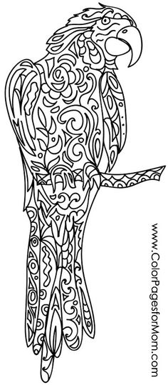parrot coloring page #colorpage #parrot #adultcoloringpage #adultcoloring