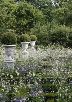 Purple and white flowers, boxwood balls in urns