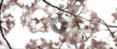 """""""sakura"""" by Red Lilium"""