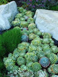 How To Use Succulent Landscape Design For Your Home Succulents In Containers, Cacti And Succulents, Planting Succulents, Planting Flowers, Succulent Landscaping, Succulent Gardening, Garden Landscaping, Dry Garden, Garden Plants