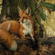 ~ Vivian Boswell - Portrait In Red And Green Wildlife Paintings, Wildlife Art, Trinidad, Fox Images, Wolf Illustration, Fox Art, Contemporary Artists, Animal Kingdom, Mammals
