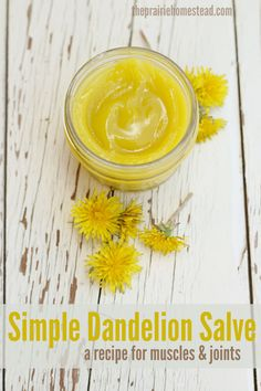 Dandelion Salve for Muscles & Joints