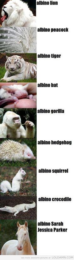 Amazing Albino Animals