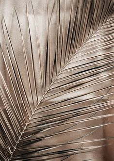 Aesthetic Backgrounds, Aesthetic Iphone Wallpaper, Aesthetic Wallpapers, Gold Wallpaper, Iphone Background Wallpaper, Fotografia Floral, Gold Aesthetic, Picture Wall, Aesthetic Pictures
