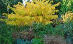 Erst mit größeren Gehölzen wird ein neuer Garten richtig heimelig. Wer weder allzu lange warten noch viel Geld ausgeben will, sollte schnellwachsende Bäume und Sträucher pflanzen.