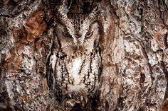 10 Aves em Perfeita Harmonia com seu Habitat | HypeVerde