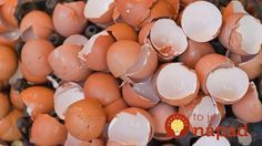 Eggshells could find use in ceramics production By Ben Coxworth February year approximately tons tonnes) of discarded eggshells must be transported and disposed of in the US alone Us Department Of Agriculture, Compost, Nordic Interior, Egg Shells, Natural Medicine, Clever Diy, Good Advice, Homemaking, Interior Design Living Room