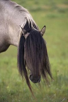 Spanish Mustang Stallion with Long Mane Over Eyes Most Beautiful Animals, Beautiful Horses, Beautiful Creatures, Horse Mane, All The Pretty Horses, Horse Breeds, Wild Horses, Zebras, Fantastic Beasts