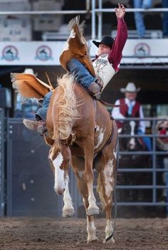 Pueblo cowboy Casey Colletti completes a successful 8-second ride aboard a horse named Short Cut during Sunday's bareback competition at the Colorado State Fair rodeo. Colletti scored a 76. (Chieftain photo by Bryan Kelsen, Aug. 26, 2012)
