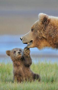 Wearing A Cumbersome Cute Baby Bear Baby Boys Cute Top Sleeve Short