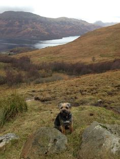 Wallsendwally...on the way to the top of Loch Lomond