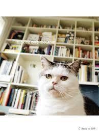 あの不思議顔の猫『まこ』と一緒に英語を学ぶ書籍『まこと学ぶ英語の本 ...