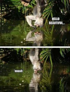 When a monkey sees his reflection...