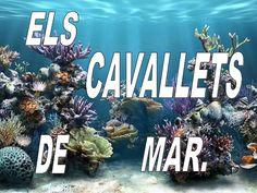 ELS CAVALLETS DE MAR VIUEN AL FONS DEL MAR. EN AIGÜES CALENTES. Animals, Seahorses, Classroom, Blue Prints, Sailors, Animales, Animaux, Animal Memes, Animal