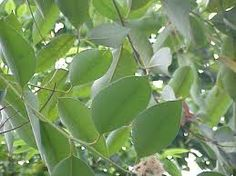 Eucalyptus Oil is anti-viral, anti-bacterial, anti-catarrhal, anti-infectious, antiseptic, analgesic, expectorant and stimulating. http://www.supersimplewellness.com/eucalyptus-essential-oil/#