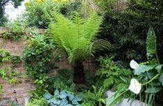 Top 10 best trees for small gardens - Living Colour Gardens Small Courtyard Gardens, Small Courtyards, Back Gardens, Small Gardens, Modern Gardens, Small Trees For Garden, Garden Trees, Terrace Garden, Garden Bed