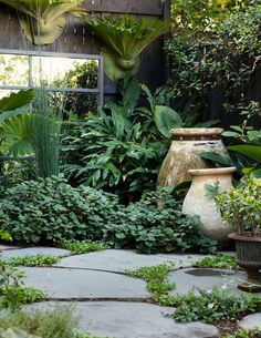 Gardening Bluestone steppers planted with native violet (Viola hederaceae) and kidney weed (Dichondra repens) provide a simple foil for abundant greenery. Image by Daniel Shipp - The lush inner city garden of leading Sydney florist, Sean Cook of Mr Cook. Small Gardens, Outdoor Gardens, Small Courtyard Gardens, Courtyard Ideas, Small City Garden, Narrow Garden, Courtyard Design, Front Courtyard, Amazing Gardens
