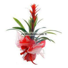 Kutlama Tebrik İcin Saksı Çiçegi. http://www.cicekbahcem.com/cicek/saksi-cicekleri/ofis-icin-saksi-cicekleri.html?p=3