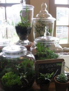 Simple instructions to make a terrarium.  --Credit: Snug Harbor Farm