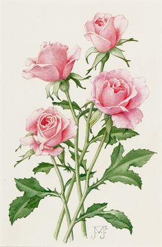 Roze rozen | Hein A.M. Klaver Kunsthandel