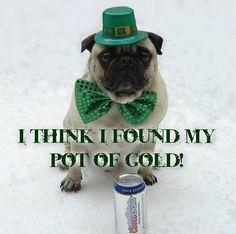 Funny St. Patrick's Day Wallpaper   Dogs Funny Dog St. Patrick Day LOL