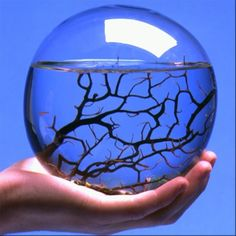 I want one of these! EcoSphere is a self-sustainin