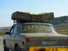 Hauling home the apples - gonna be apple pie tonight!