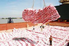 gevellopement durable le riz   An Giang entend doper ses exportations de riz Les exportations du ...