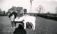 Author Marsha Diane Arnold and her father on their Ayrshire cattle farm. This was the inspiration for Prancing, Dancing Lily.  http://fatredcouch.com/Prancing_Dancing_Lilly