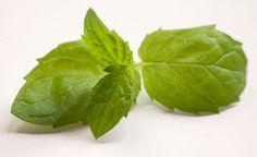 Parhaat mintut kasvatukseen Vegetable Garden, Spinach, Plant Leaves, Vegetables, Plants, Food, Vegetables Garden, Essen, Vegetable Recipes