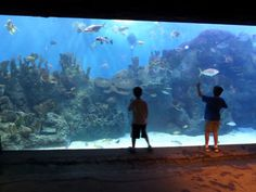 Waco's Cameron Park Zoo and Mayborn Museum Complex make for an all-day adventure!  http://austinactivekids.com/2013/08/13/cameron-park-zoo-and-mayborn-museum-complex/  wpid-sam_0859-2013-08-12-21-14.jpg