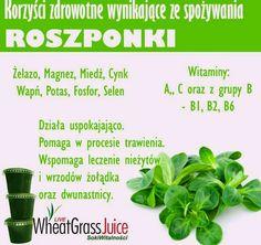 Zielone koktajle: ogórek + trawa pszeniczna + seler naciowy + brokuł + marchewka + roszponka-----------RABAT 10% na kod: zielonekoktajle przy zakupie mrożonej trawy pszenicznej na stronie http://sokiwitalnosci.pl