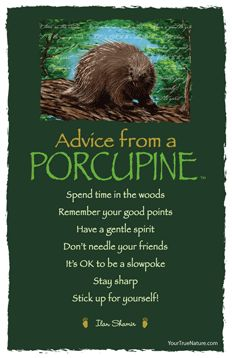 Advice from a Porcupine Frameable Art Card – Your True Nature, Inc. Animal Spirit Guides, Spirit Animal, Animal Medicine, Power Animal, Advice Quotes, Humour Quotes, True Nature, Animal Totems, Nature Quotes