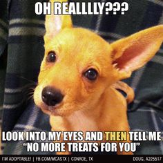 It's a TRAP!!! Do NOT look! Never ever look or all your treats will be GONE!!! #funny #dogs