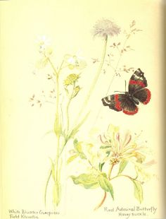 Heroines of the Faith: Nature Journal of Edith Holden